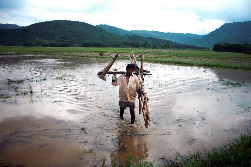 Dans un champ d'Assam.