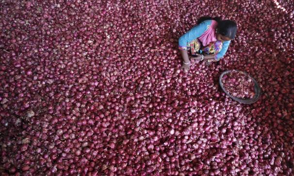 En Inde, on ne plaisante pas avec les oignons. Ils peuvent envoyer des politiciens dans les choux.