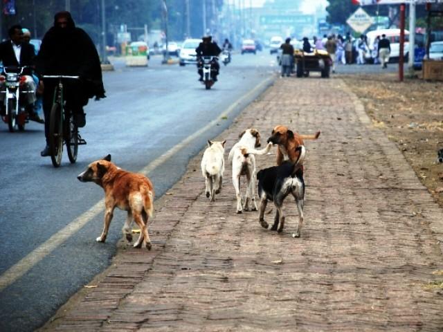 Chiens errants dans les rues de Karachi